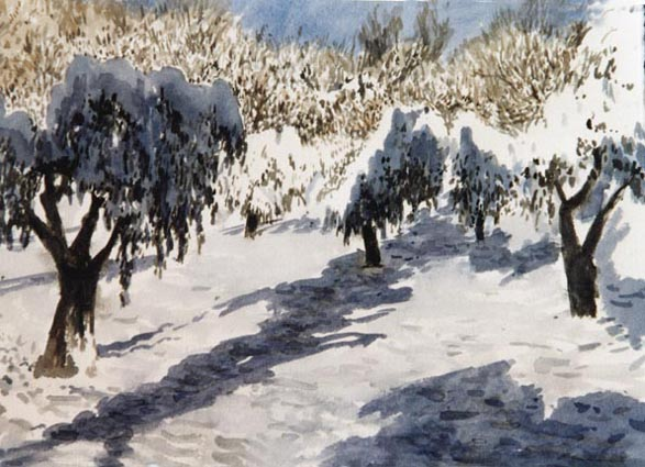 Olive trees in the snow