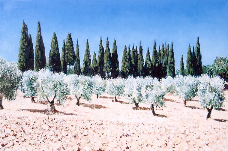 Cypresses and Olive grove